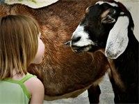 Scheinbar sehr unterschiedliche Wesen können miteinander in Kontakt treten, wenn sie die richtige Form dafür finden.